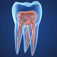 Root Canal System inside a tooth